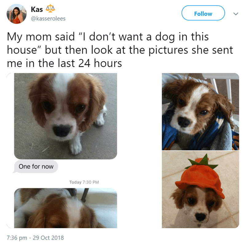 """mom's dog - Dog - Kas Follow @kasserolees My mom said """"I don't want a dog in this house"""" but then look at the pictures she sent me in the last 24 hours One for now Today 7:30 PM 7:36 pm 29 Oct 2018"""