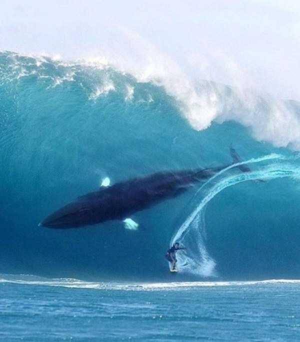 animal photo - Wind wave