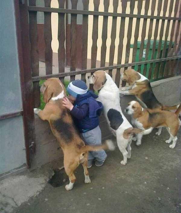 animal photo - Dog
