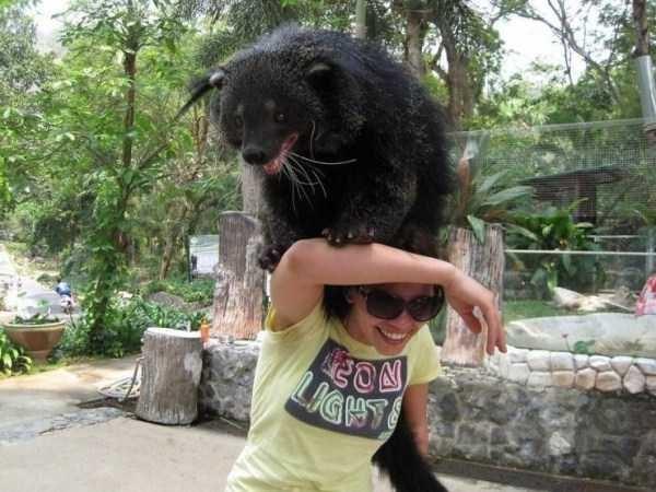 animal photo - Sun bear - NOS