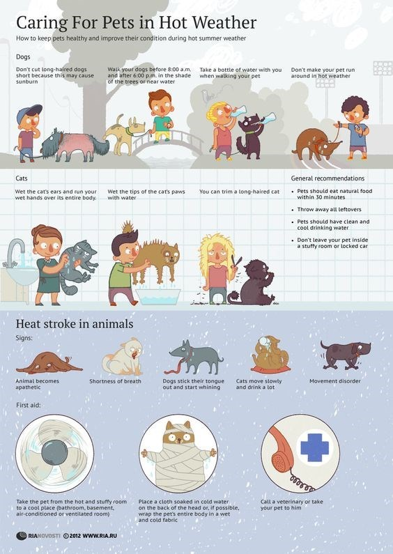 tips Heat pets weather animals - 9323391232