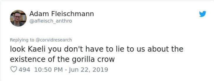 Text - Adam Fleischmann @afleisch_anthro Replying to @corvidresearch look Kaeli you don't have to lie to us about the existence of the gorilla crow 494 10:50 PM - Jun 22, 2019