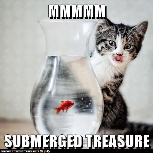 cat meme cute treasure fish cat memes - 9323531008
