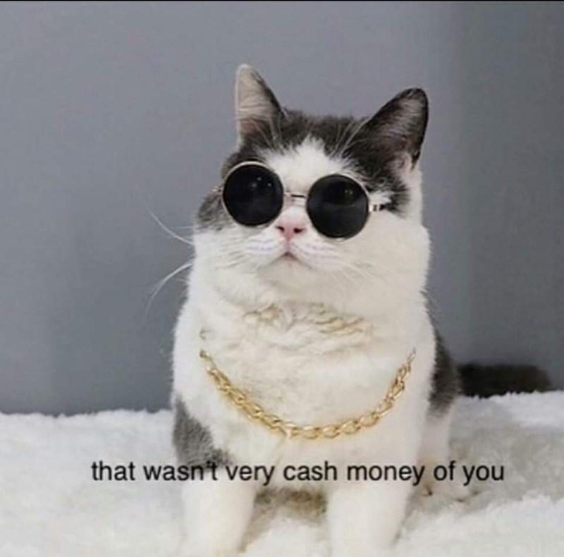 random meme - Cat - that wasn't very cash money of you