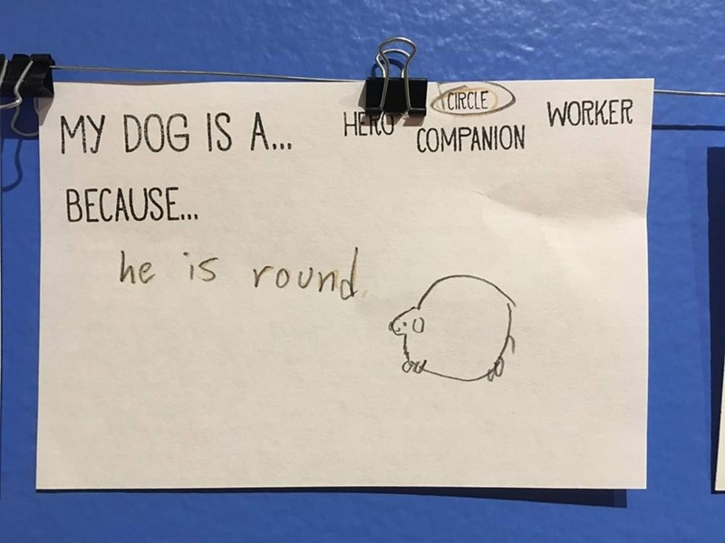 random meme - Text - CIRCLE MY DOG IS A.. WORKER HERO COMPANION BECAUSE.. he is round