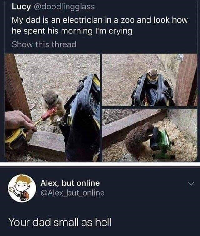 random meme - Adaptation - Lucy @doodlingglass My dad is an electrician in a zoo and look how he spent his morning I'm crying Show this thread Alex, but online @Alex_but online Your dad small as hell