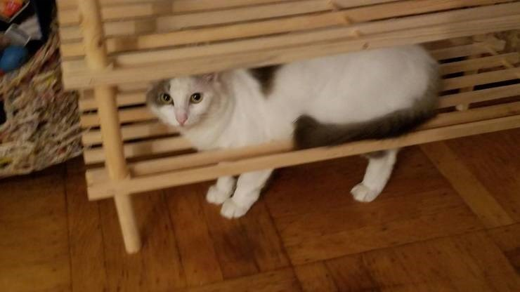 struggling - Cat