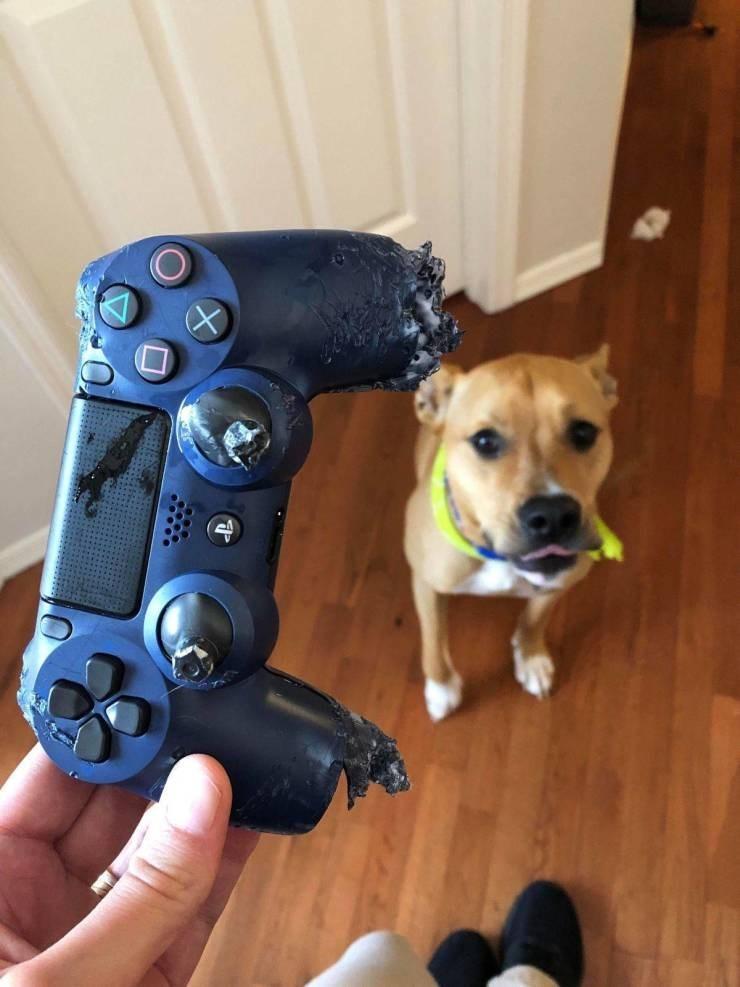 struggling - Dog breed