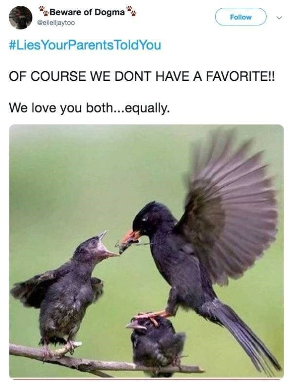 Bird - Beware of Dogma @ellelljaytoo Follow #LiesYourParentsToldYou OF COURSE WE DONT HAVE A FAVORITE!! We love you both...equally.