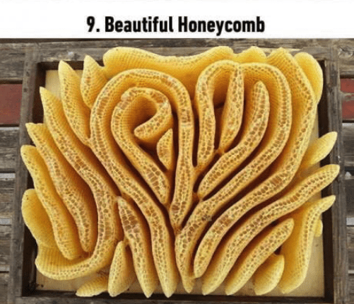 soothing image - Yellow - 9. Beautiful Honeycomb