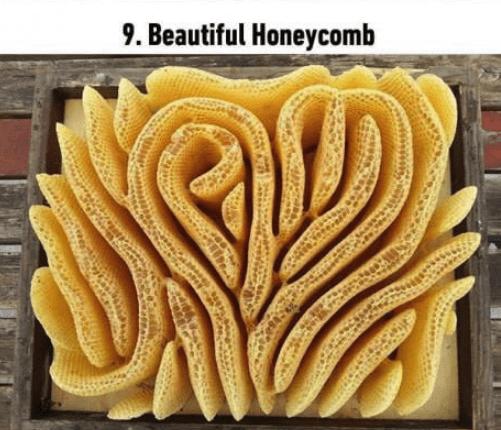 soothing image - Yellow - 9. Beautiful Honeycomb