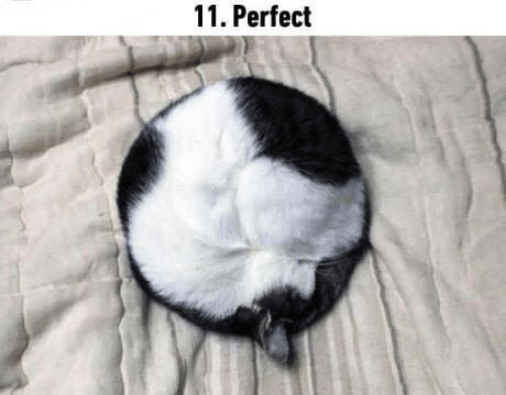 soothing image - Fur - 11. Perfect