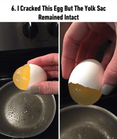 soothing image - Egg - 6.ICracked This Egg But The Yolk Sac Remained Intact