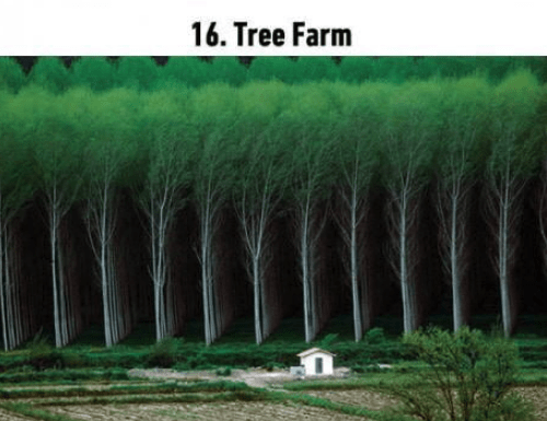 soothing image - Green - 16. Tree Farm