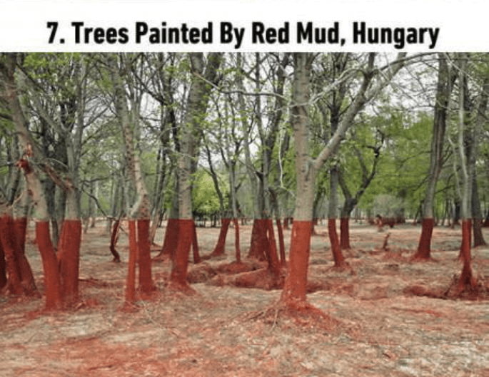 soothing image - Tree - 7. Trees Painted By Red Mud, Hungary