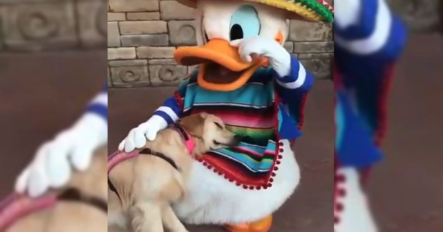 nala service dog donald duck disney