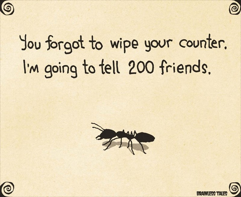 Insect - Insect - Jou forgot to wipe your counter. Im going to tell 200 friends. BRAINLESS TALES