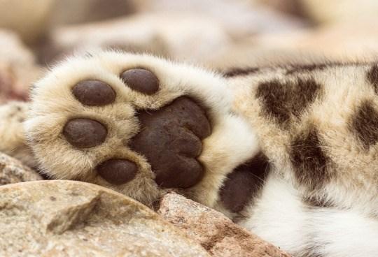 cat paw - Paw