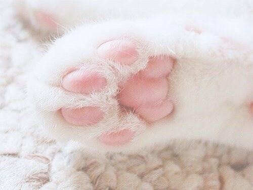 cat paw - Pink
