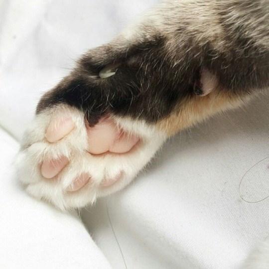 cat paw - Cat