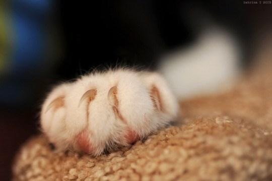 cat paw - Cat - Sebrine 201