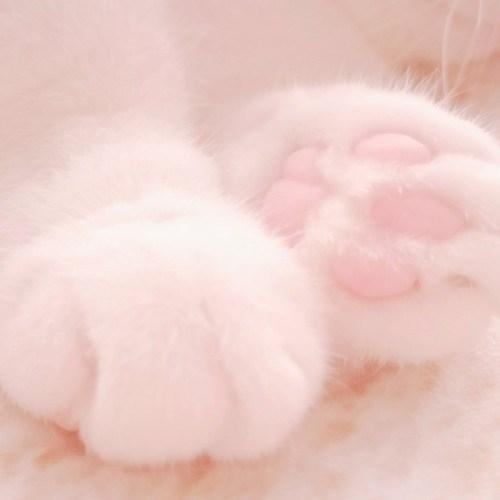 cat paw - Pink - w