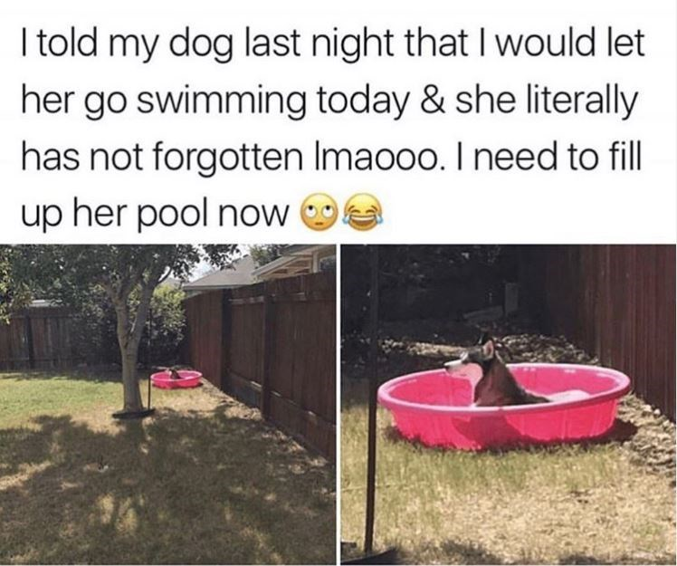 Dog memes - Adaptation - I told my dog last night that I would let her go swimming today & she literally has not forgotten Imaooo. I need to fill up her pool now