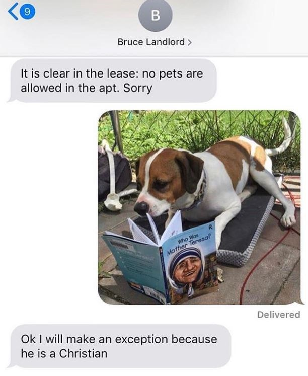 Dog meme - <@ Bruce Landlord > It is clear in the lease: no pets are allowed in the apt. Sorry Who Wos Mother Teresa? Delivered Ok I will make an exception because he is a Christian