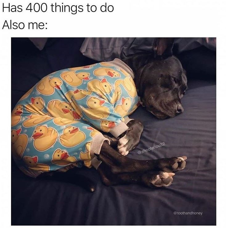 Dog meme - Has 400 things to do Also me: @shooterlou32 @toothandhoney