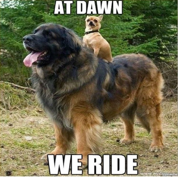 Dog - AT DAWN WE RIDE www.hyelameme