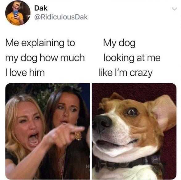 Dog meme - Dak @RidiculousDak Me explaining to My dog looking at me like I'm crazy my dog how much I love him