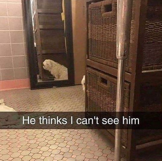 Tile - He thinks I can't see him
