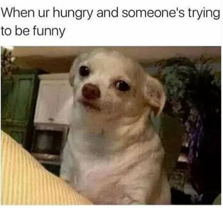 Dog meme - When ur hungry and someone's trying to be funny