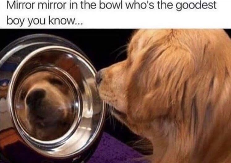 Dog breed - Mirror mirror in the bowl who's the goodest boy you know...