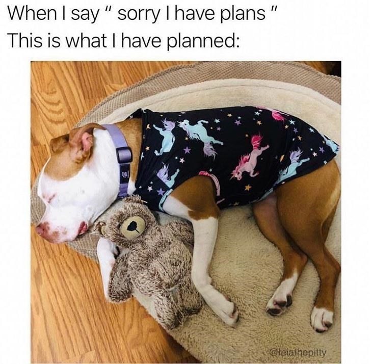 """Dog clothes - When I say """" sorry I have plans """" This is what I have planned: c@leiaihepitty"""