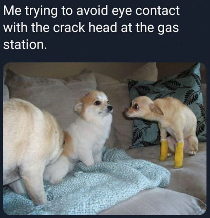 Canidae - Me trying to avoid eye contact with the crack head at the gas station.