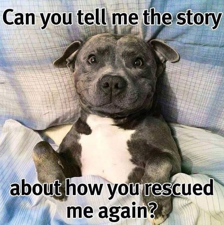 Dog meme - Can you tell me the story about how you rescued me again?