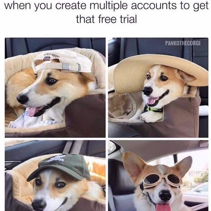 Dog - when you create multiple accounts to get that free trial PANKOTHECORGI OLOASS