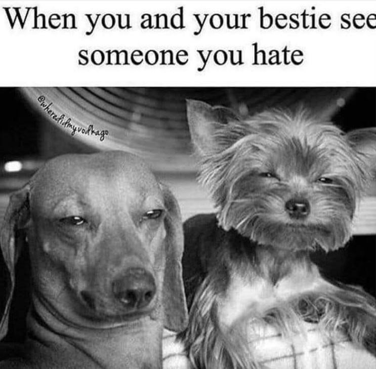 Dog breed - When you and your bestie see someone you hate hereivakage