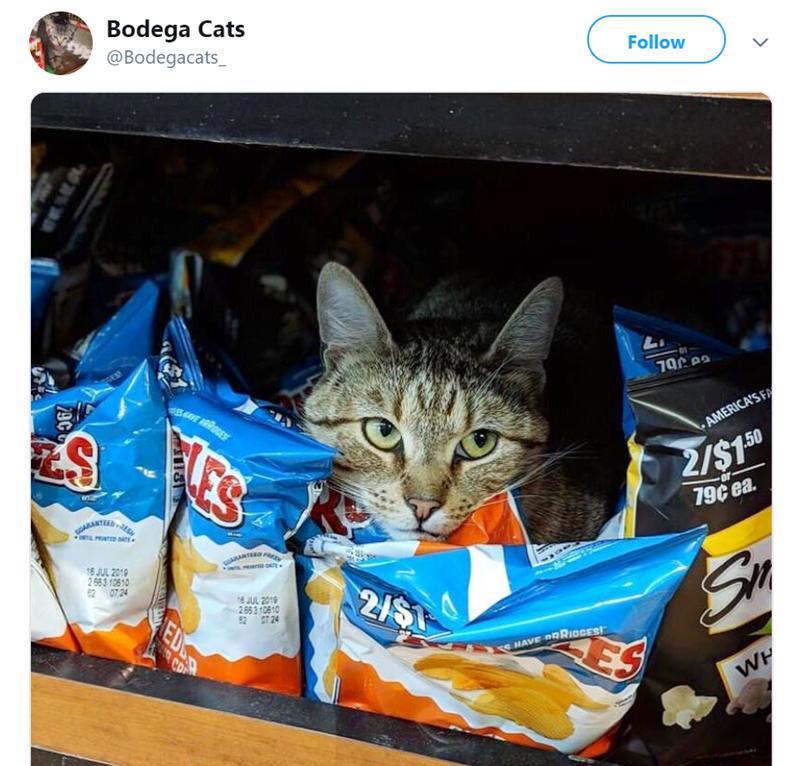 cat in store - Cat - Bodega Cats @Bodegacats_ Follow L. S AMERICA'S FA 2/$1 50 MANTEDA or- UNTL TD SATE 79¢ ea gARANTEED PRE I DATE 16 JUL 2019 2563 10610 62 07 24 8 JUL 2019 2 653 10810 62 724 NAVE BRIDGES! ES WH 29C ED