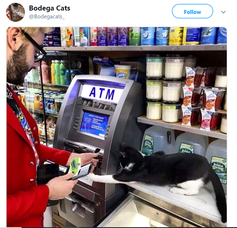 cat in store - Product - Follow Bodega Cats @Bodegacats_ ATM Delend Spring