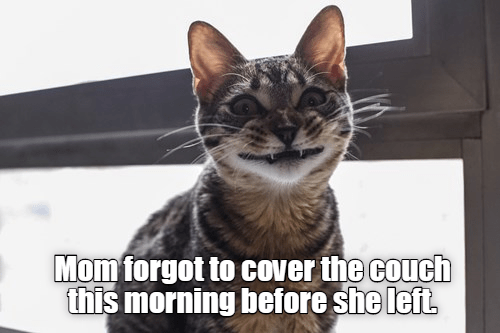 Cat - Mom forgot to cover the couch this morning before she left