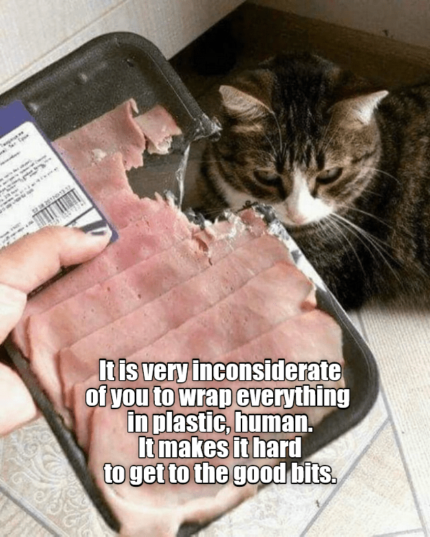 Cat - erCp Itis very inconsiderate of you to wrap everything in plastic, human. Itmakes it hard to get to the good bits.