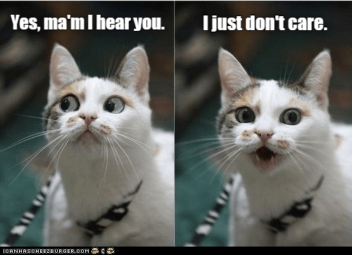 Cat - Yes, ma'm I hear you. I just don't care. CANHASCHEE2EURGER cOM