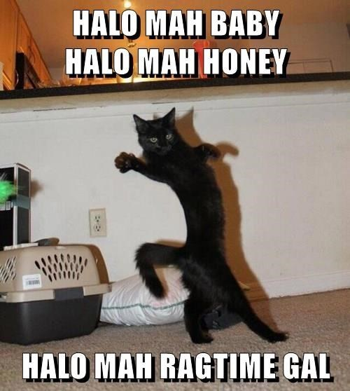 Cat - HALO MAH BABY HALO MAH HONEY HALO MAH RAGTIME GAL
