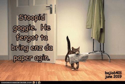 Laminate flooring - Stoopid goggie, He fergot ta bring enz da paper agin. bajio6401 june 2019 ICANHASCHEE2EURGER cOM