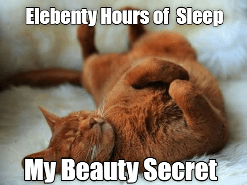 Cat - Photo caption - Elebenty Hours of Sleep My Beauty Secret
