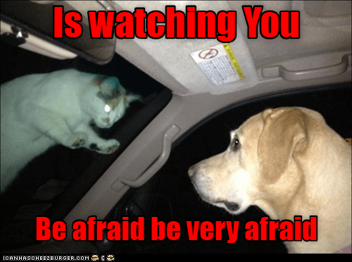 Cat - Canidae - Is watching You Be afraid be very afraid ICANHASCHEEZEURGEROOM