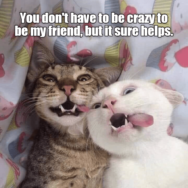 Cat - You don't have to be crazy to be my friend, but it sure helps.
