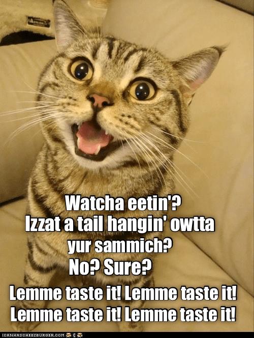 Cat - Watcha eetin? IZzat a tail hangin' owtta yur sammich? No? Sure? Lemme taste it! Lemme taste it! Lemme taste it! Lemme taste it! ICANHASCHEE2E0RGER cOM